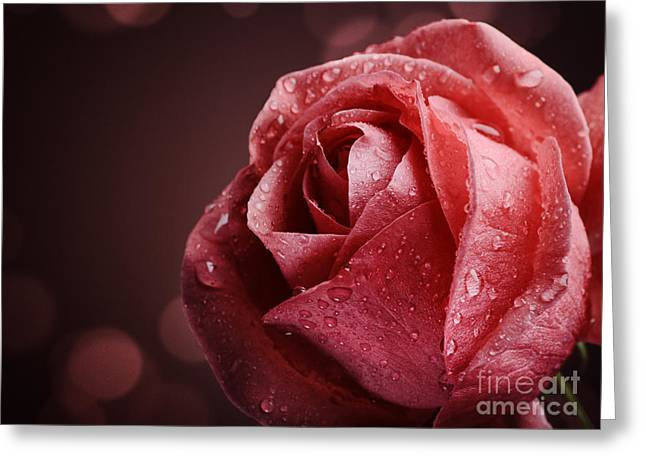 Red Art Greeting Cards - Rose Greeting Card by Jelena Jovanovic