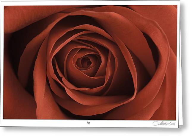 Matre Greeting Cards - Rose Greeting Card by Lar Matre