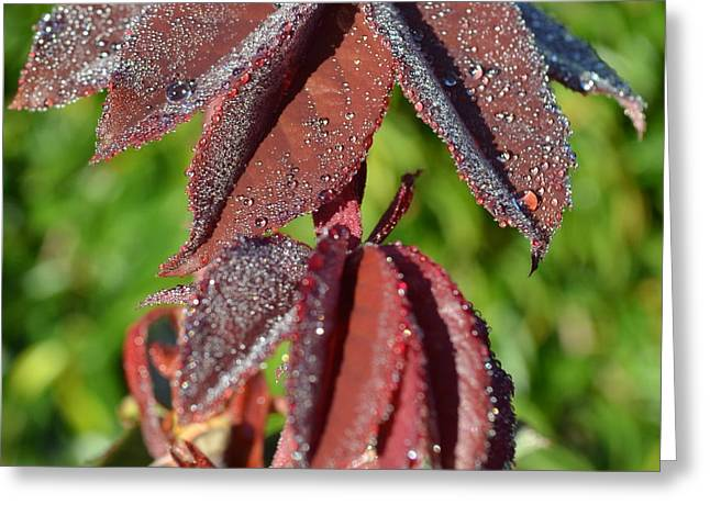 Rose Leaves In Dew 1.5 Greeting Card by Cheryl Miller