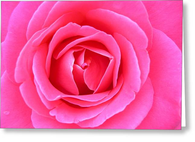 Sensitivity Greeting Cards - Rose Greeting Card by Magali Gauthier
