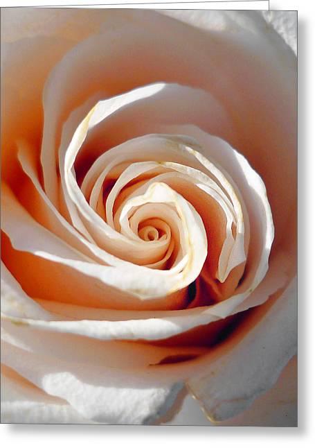 Rose Petals Greeting Cards - Rose Magnificent Spiral  Greeting Card by Irina Sztukowski