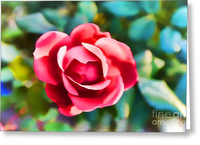 Centifolia Greeting Cards - Rose Making A Good Impression Greeting Card by Luther   Fine Art