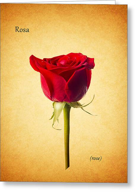 Sills Greeting Cards - Rose Greeting Card by Mark Rogan