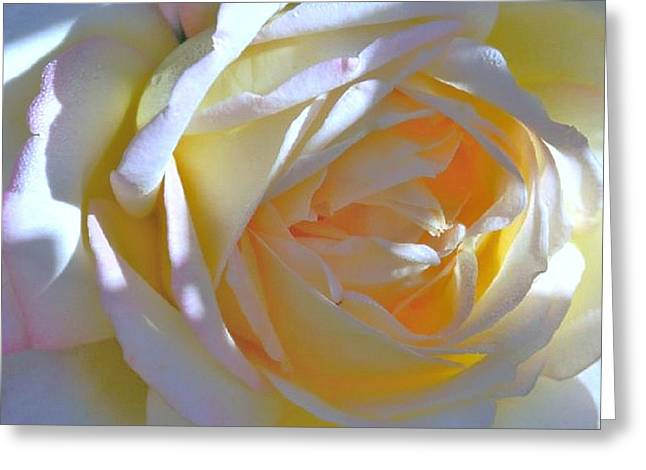 Landscape Prints Greeting Cards - Rose Greeting Card by N S