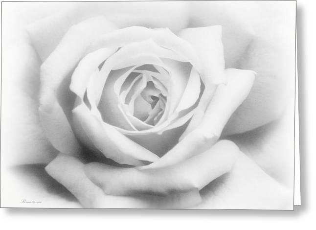 Virginal Greeting Cards - Rose Of Innocence Greeting Card by Georgiana Romanovna