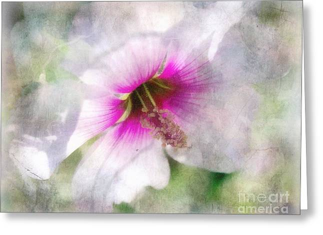 Rose Of Sharon Greeting Card by Barbara Chichester