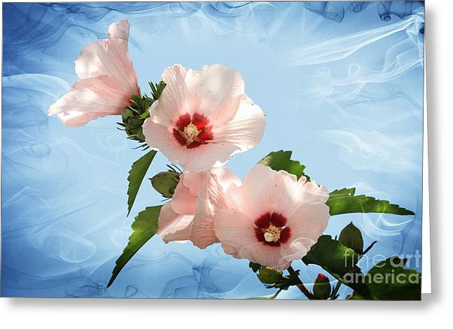 Geraldine Deboer Greeting Cards - Rose of Sharon Greeting Card by Geraldine DeBoer