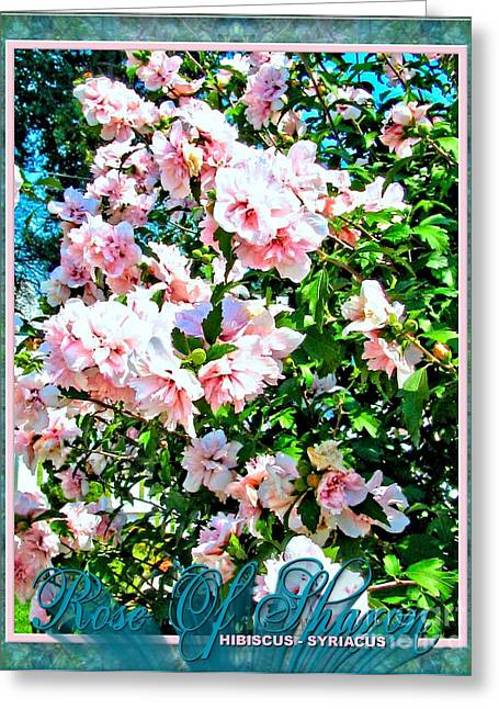 Althea Digital Art Greeting Cards - Rose of Sharon -Hibiscus Syriacus Greeting Card by Margaret Newcomb