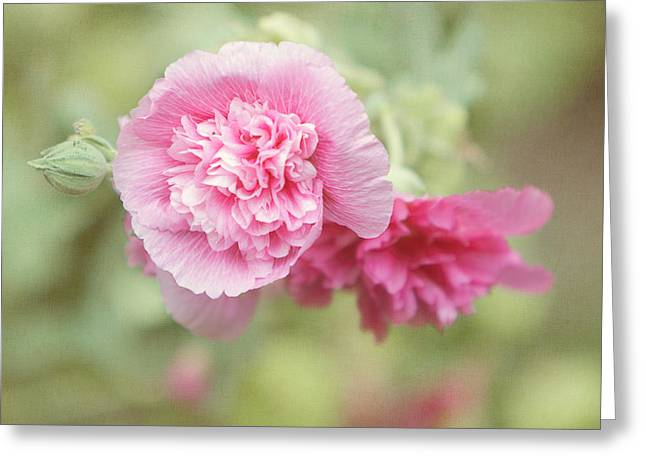 Pink Althea Greeting Cards - Rose of Sharon Greeting Card by Kay Pickens