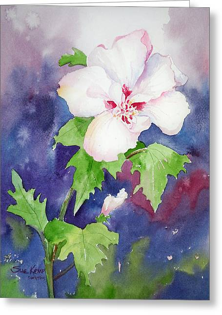 Althea Paintings Greeting Cards - Rose of Sharon Greeting Card by Sue Kemp