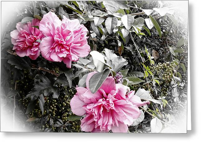 Whiteoaks Photography Greeting Cards - Rose of Sharon-Vintage Warmth Greeting Card by Eva Thomas