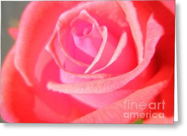 Rose Petals Greeting Cards - Rose of Summer Greeting Card by Liz Snyder