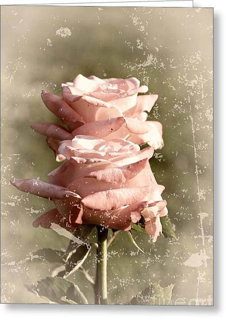 Roses In Bud Greeting Cards - Rose Old-fashioned Greeting Card by Stefano Senise