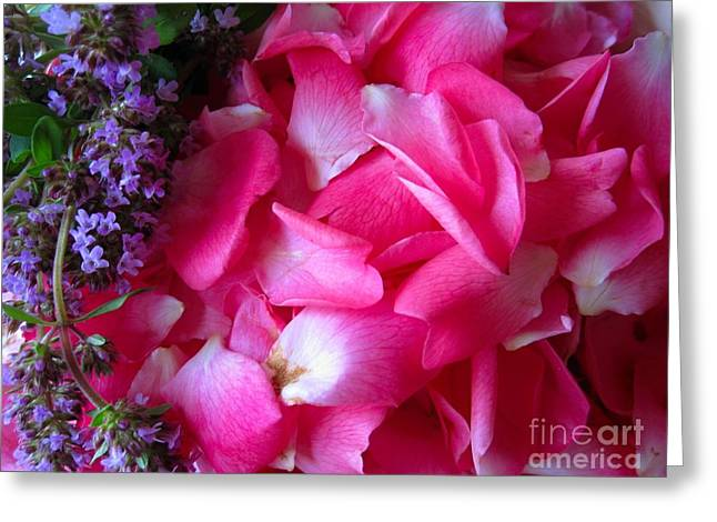Pinks And Purple Petals Photographs Greeting Cards - Rose Petals and Thyme Greeting Card by Margaret Newcomb