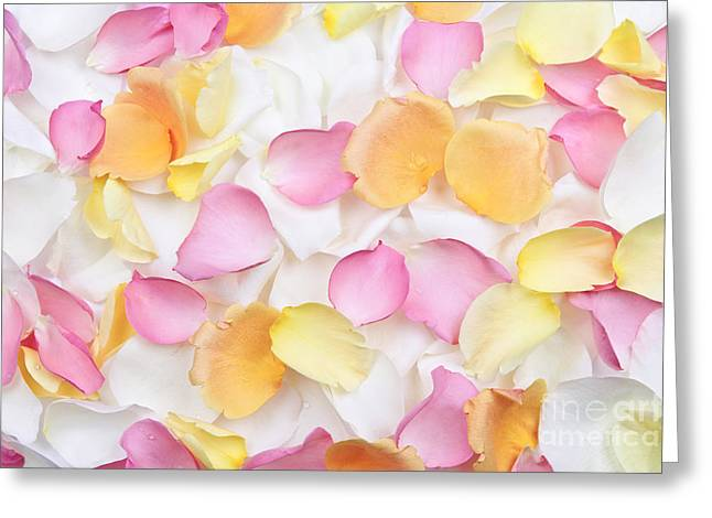 Rose petals background Greeting Card by Elena Elisseeva