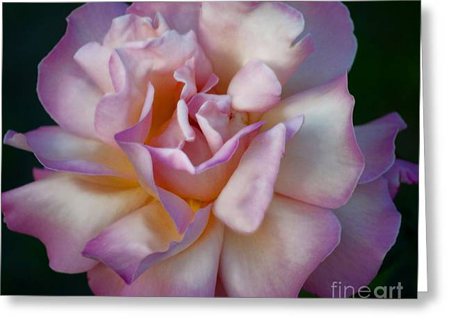 Rose Petals Straight From My Heart Greeting Card by Gwyn Newcombe