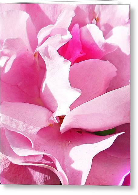 Rose Petals Greeting Cards - Rose Pink And Beautiful  Greeting Card by Irina Sztukowski