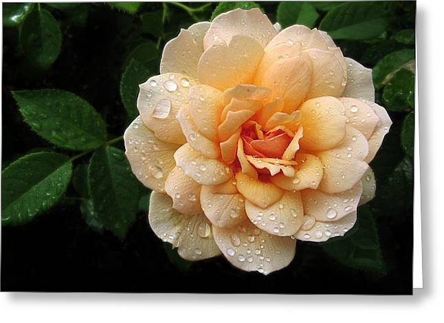 Droplet Digital Greeting Cards - Rose Rain Greeting Card by Jessica Jenney