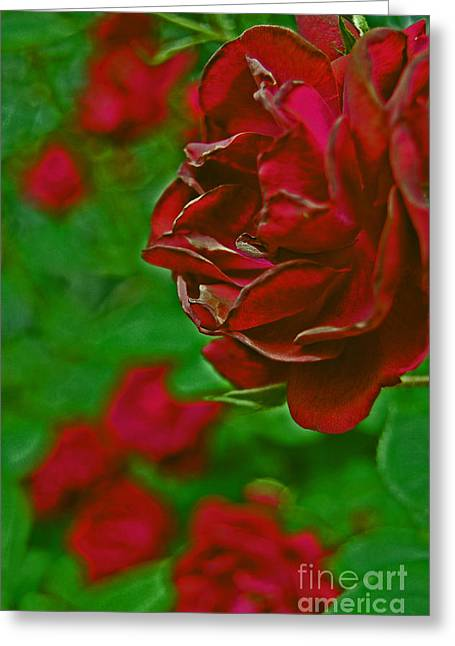 First Love Greeting Cards - Rose Red by jrr Greeting Card by First Star Art