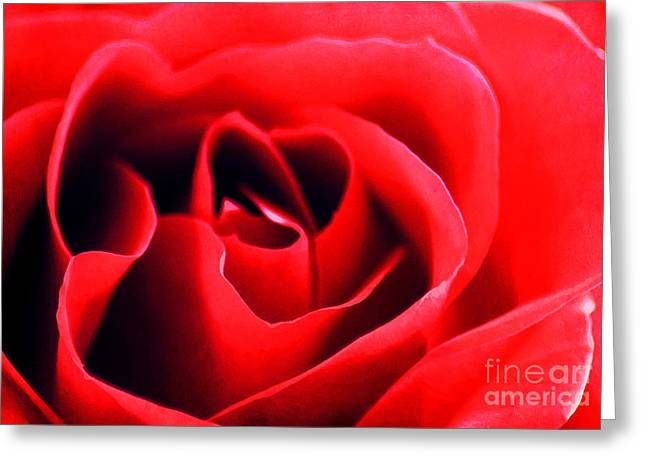 Rose Red Greeting Card by Darren Fisher