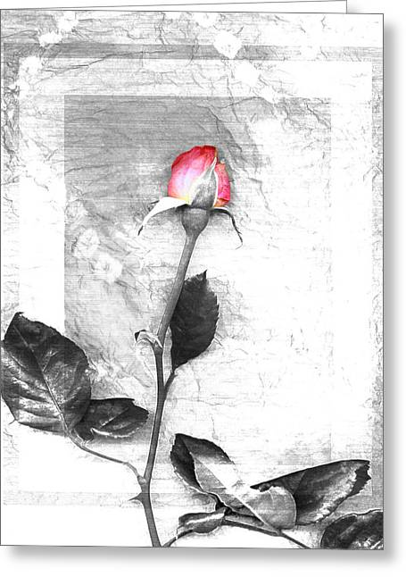 Flowers Greeting Cards - Rose Red One Greeting Card by Linda Mears