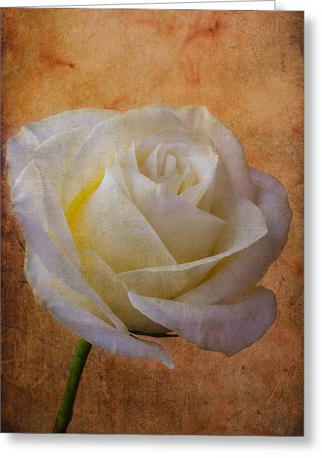 Texture Flower Greeting Cards - Rose Romance Greeting Card by Garry Gay