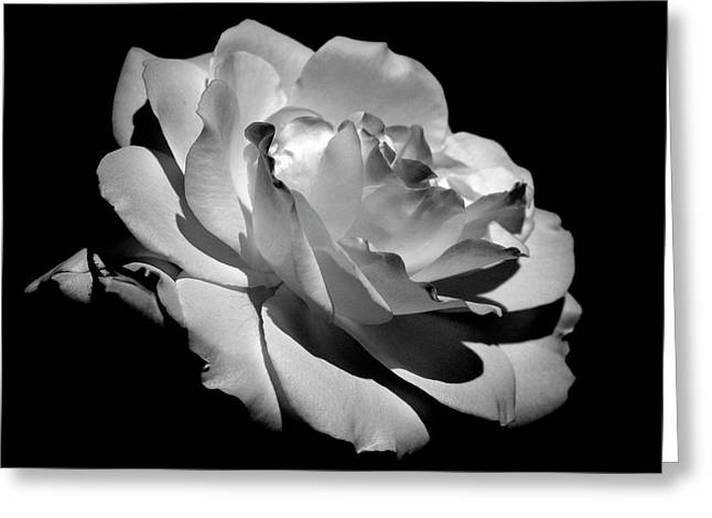 White Floral Greeting Cards - Rose Greeting Card by Rona Black