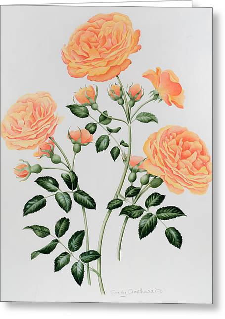 Roses In Bud Greeting Cards - Rose St Richard of Chichester  Greeting Card by Sally Crosthwaite