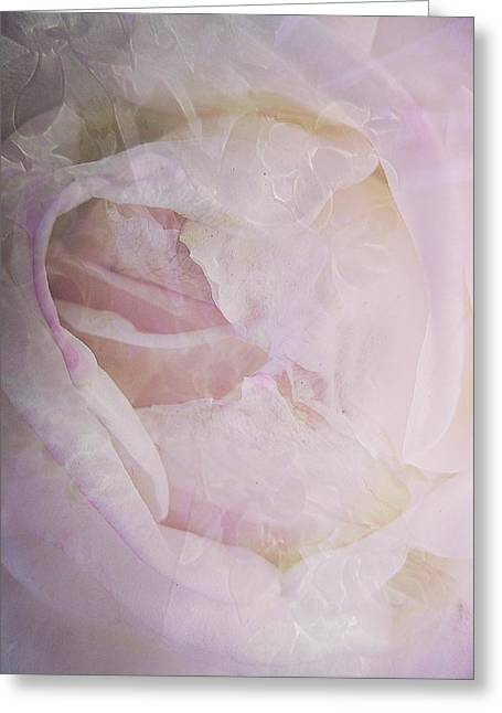 Muted Mauve Greeting Cards - Rose Study 4 Greeting Card by Shirley Sirois