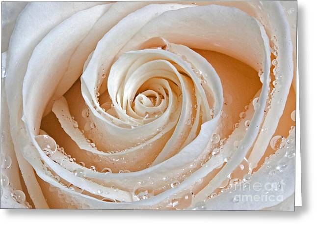 Garden Greeting Cards - Rose Swirls and Dew Greeting Card by Susan Candelario