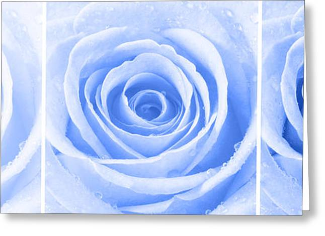 Bathroom Prints Greeting Cards - Rose Trio - Blue Greeting Card by Natalie Kinnear