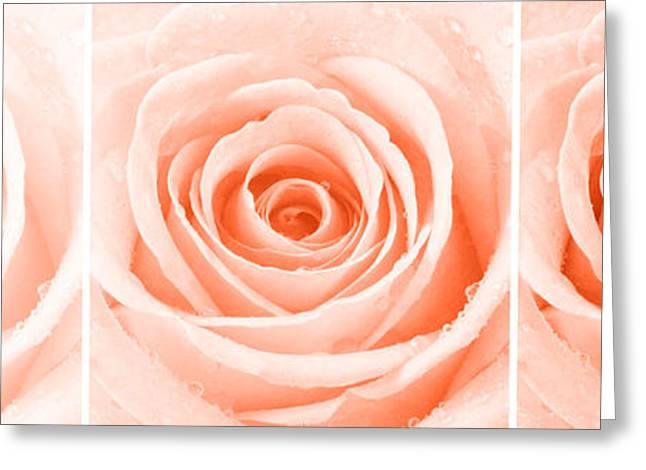 Rose Petals Greeting Cards - Rose Trio - Orange Greeting Card by Natalie Kinnear