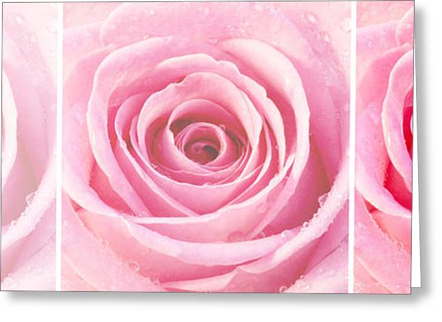 Rose Petals Greeting Cards - Rose Trio - Pink Greeting Card by Natalie Kinnear