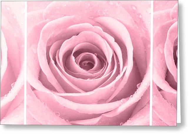 Rose Petals Greeting Cards - Rose Trio - Plum Greeting Card by Natalie Kinnear