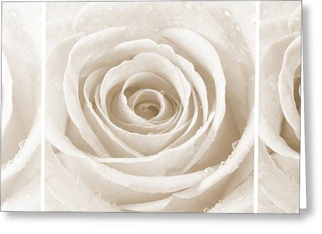 Bedroom Art Greeting Cards - Rose Trio - Sepia Greeting Card by Natalie Kinnear