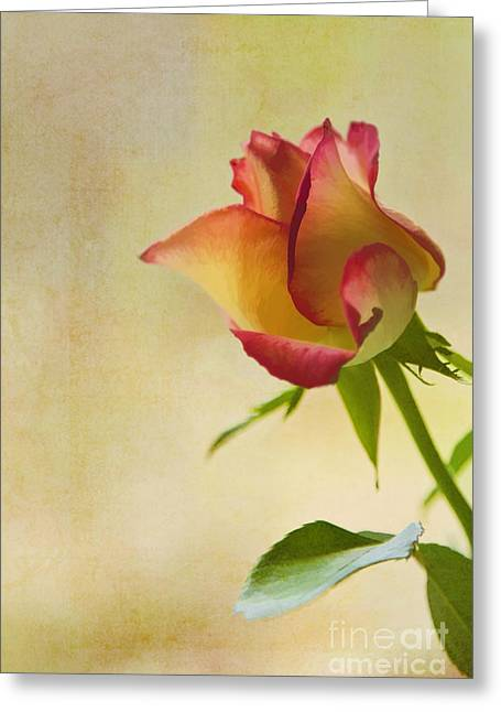 Many Digital Greeting Cards - Rose Greeting Card by Veikko Suikkanen