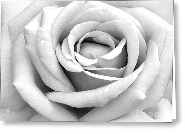 Op Art Photographs Greeting Cards - Rose with Tears Greeting Card by Sabrina L Ryan