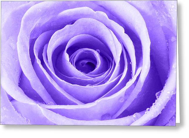 Bathroom Prints Greeting Cards - Rose with Water Droplets - Purple Greeting Card by Natalie Kinnear