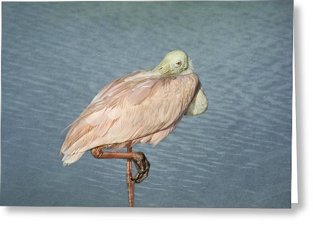 Gulf Coast States Greeting Cards - Roseate Spoonbill Greeting Card by Kim Hojnacki