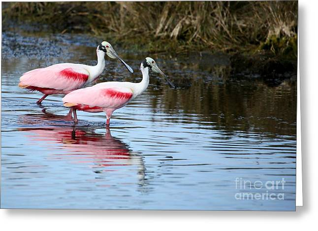 Titusville Greeting Cards - Roseate Spoonbill Mates Greeting Card by Sabrina L Ryan