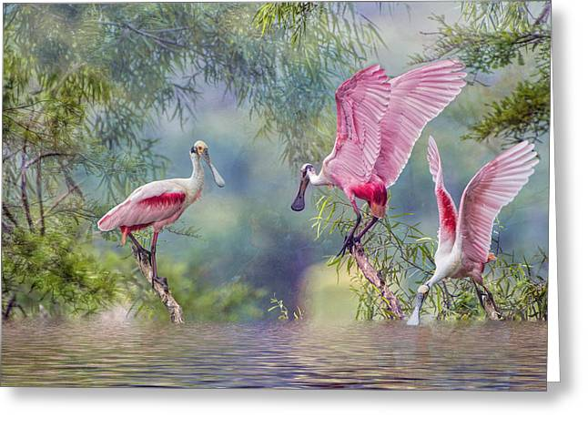 Roseate Spoonbill Trio Greeting Card by Bonnie Barry