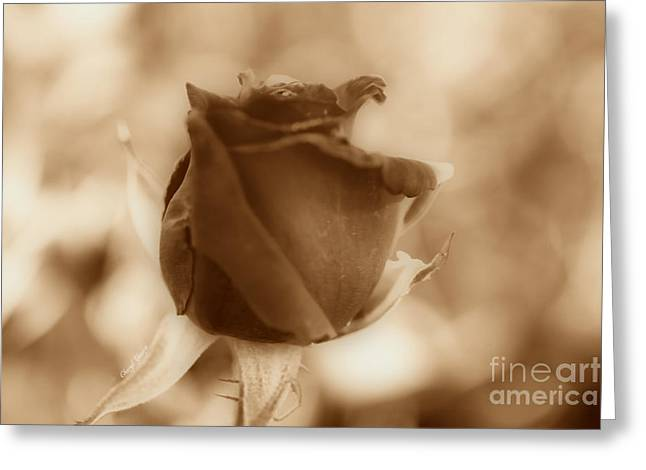 Rosebud Sepia Tone Greeting Card by Cheryl Young