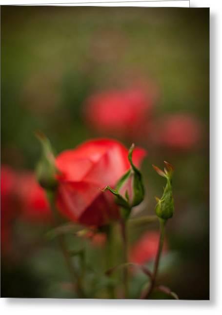 Rosehip Edge Greeting Card by Mike Reid