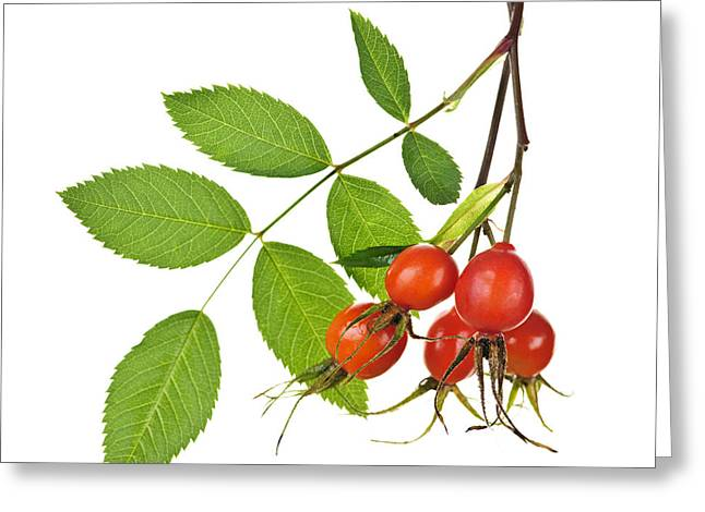 Medicinal Greeting Cards - Rosehips on white Greeting Card by Elena Elisseeva
