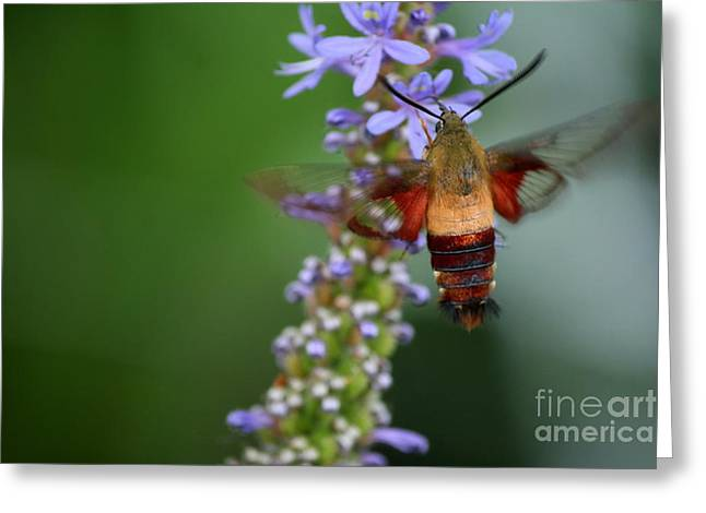 Macro Photography Greeting Cards - Roseland Lake Butterfly Moth Visit  Greeting Card by Neal  Eslinger