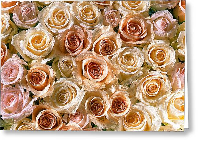 Roses 1 Greeting Card by Mauro Celotti