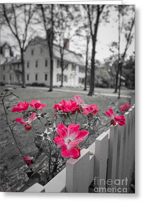 Deerfield Greeting Cards - Roses along a picket fence Deerfield Massachuesetts Greeting Card by Edward Fielding