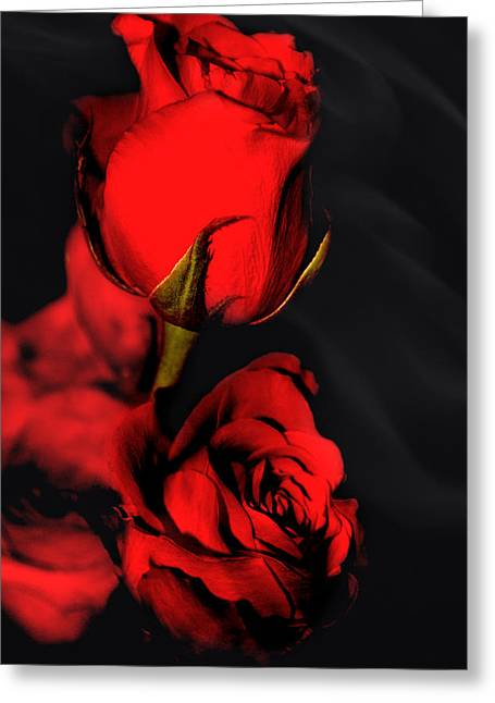 Engagement Gift Greeting Cards - Roses are Red Greeting Card by Paul St George