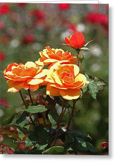 Mcc Greeting Cards - Roses At MCC Greeting Card by Tom Janca