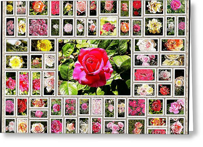 Medium Pink Greeting Cards - Roses Collage 2 - painted Greeting Card by Stefano Senise
